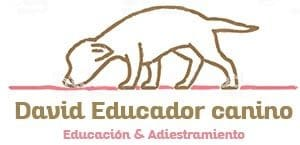 David Educador Canino