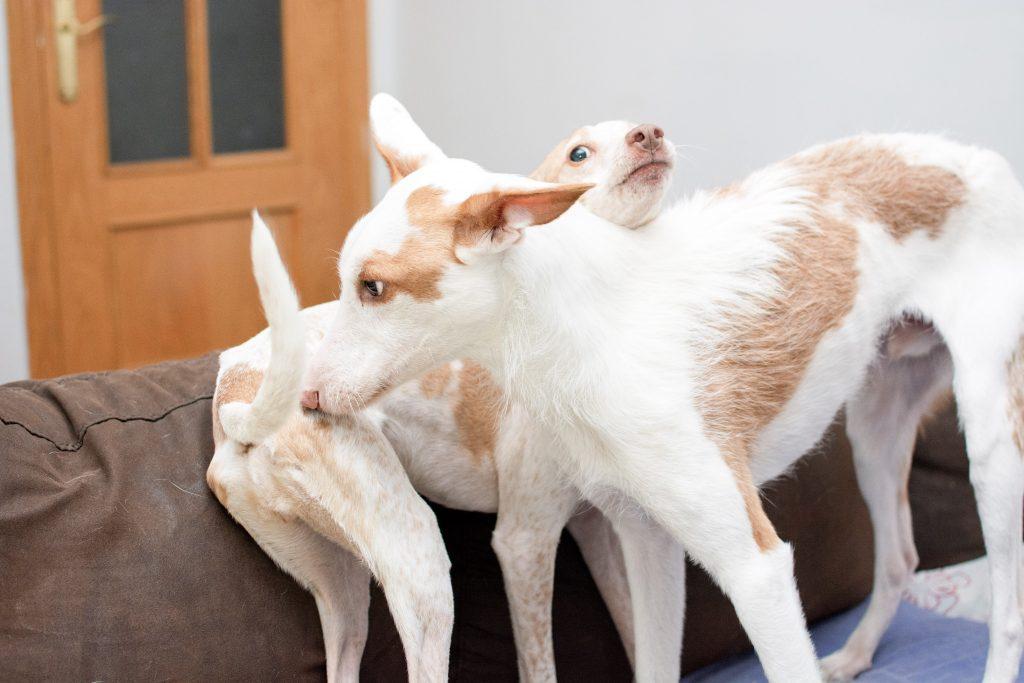 educación canina el casar