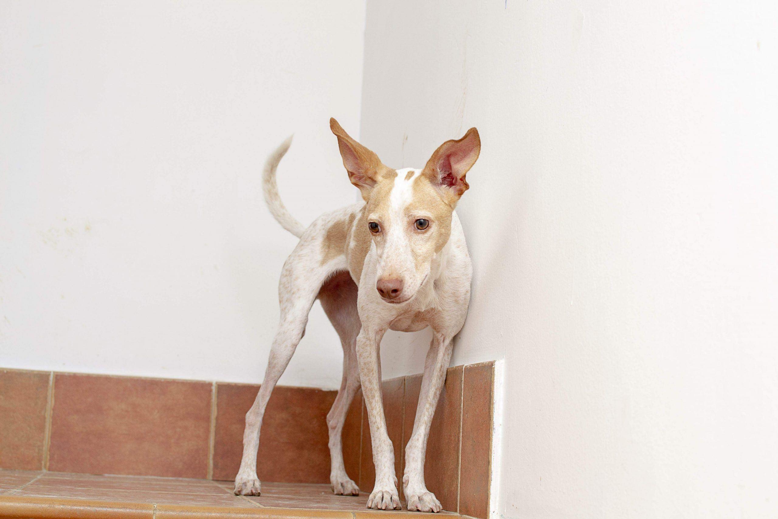tratamiento miedo en perros