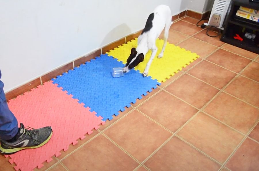 adiestramiento perros detectores