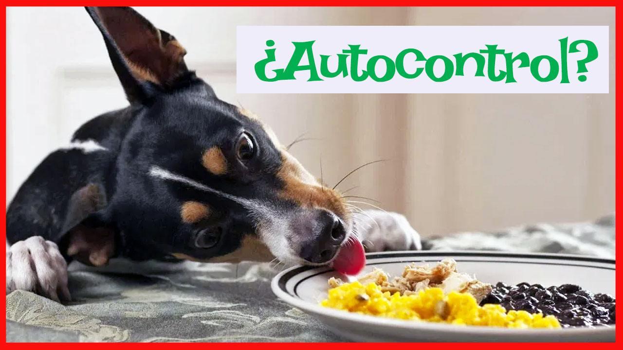 autocontrol perros