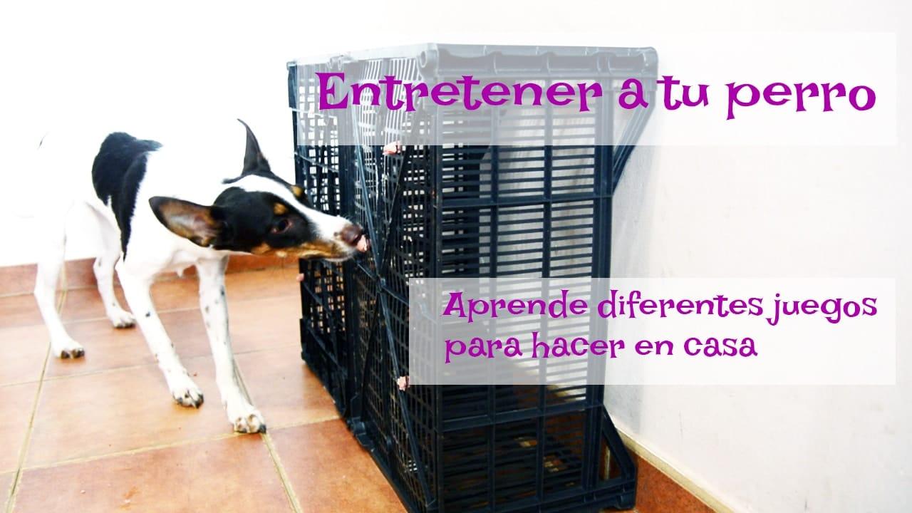 estimulacion ambiental para perros