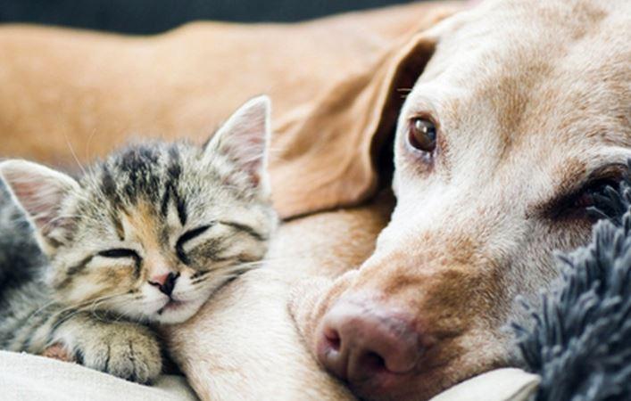 como tratar el estrés en perros