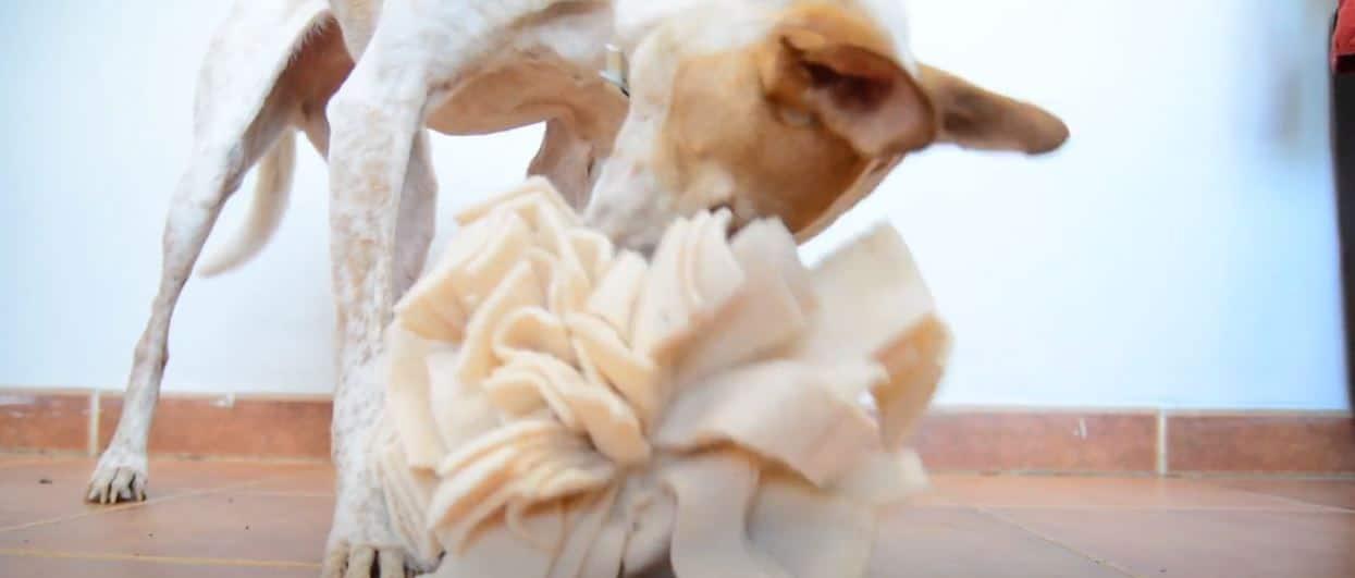 bola de olfato estimulacion para perros