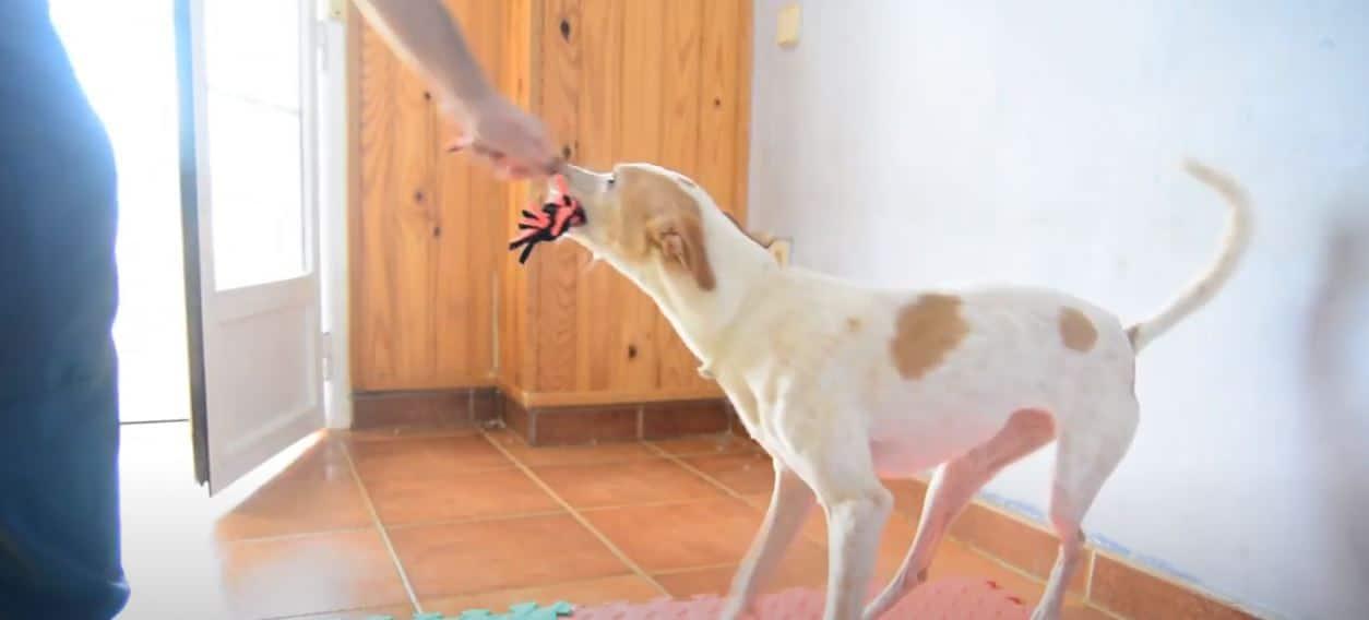 mordedor de trapillos para perros