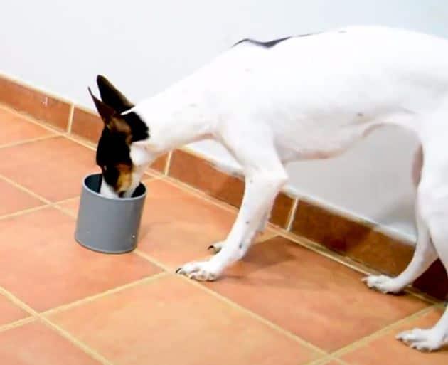 adiestramiento de perros detectores