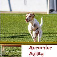 aprender agility