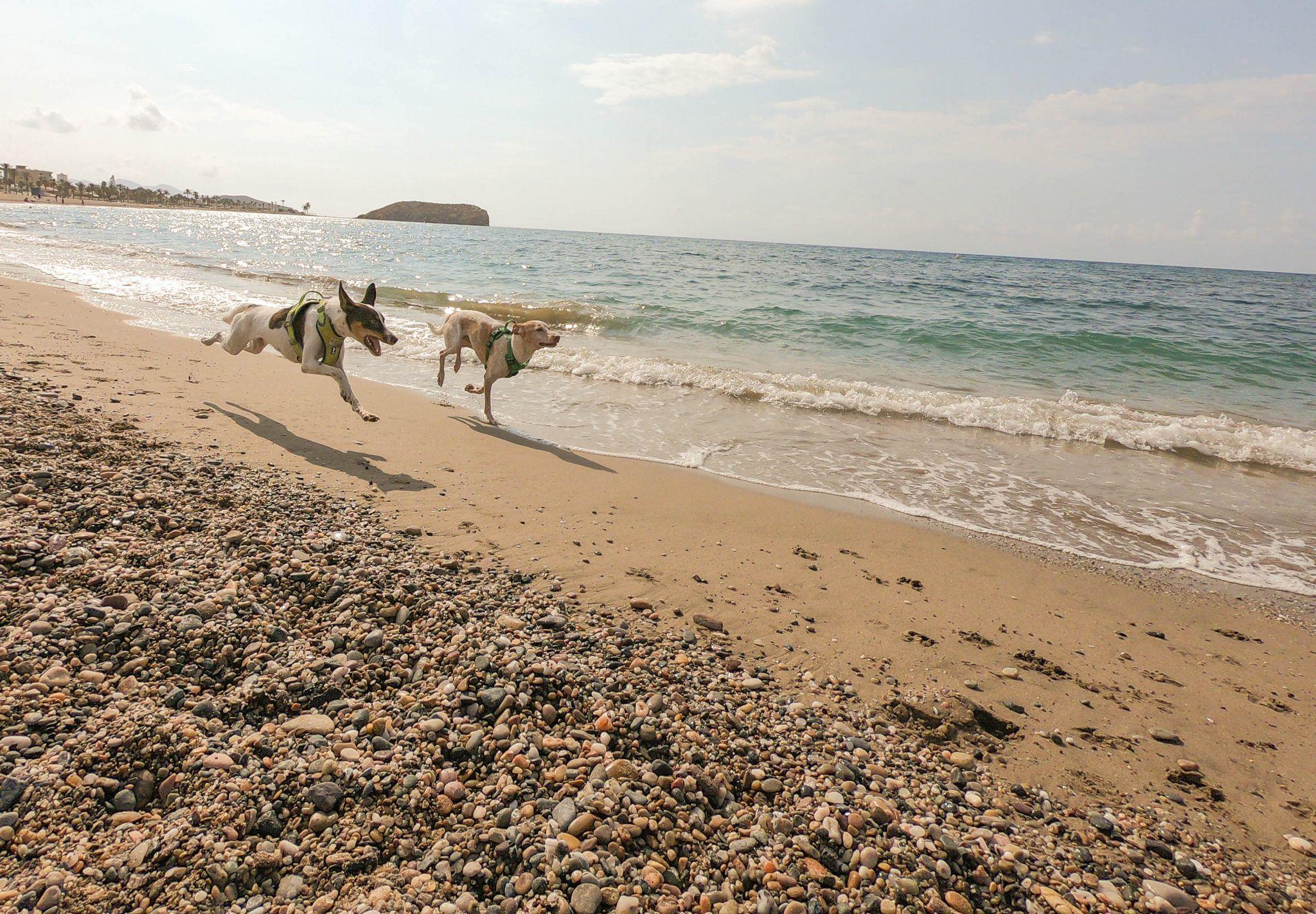 playas caninas de españa