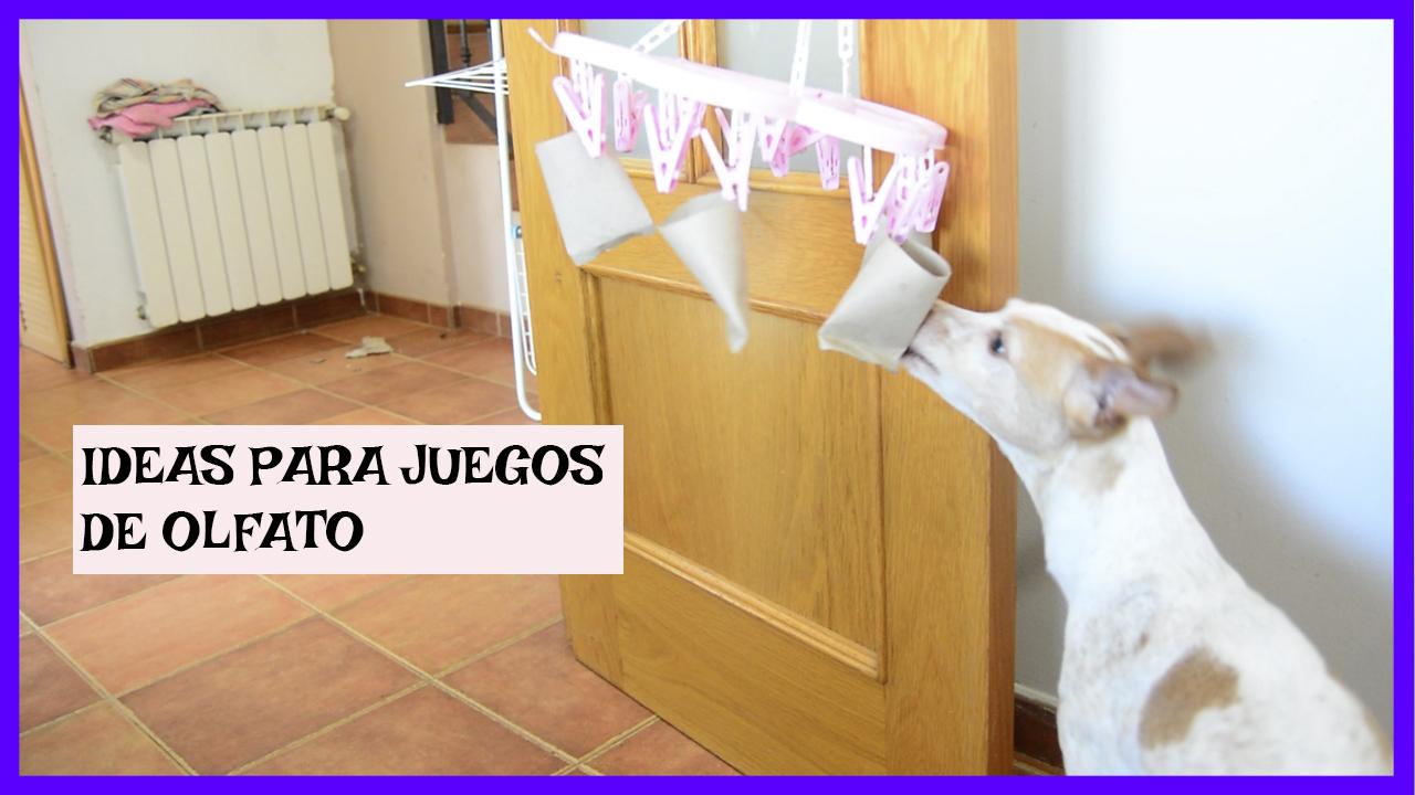 juegos de olfato e inteligencia perros