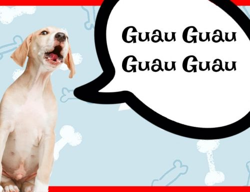 Guau Guau – Ladridos