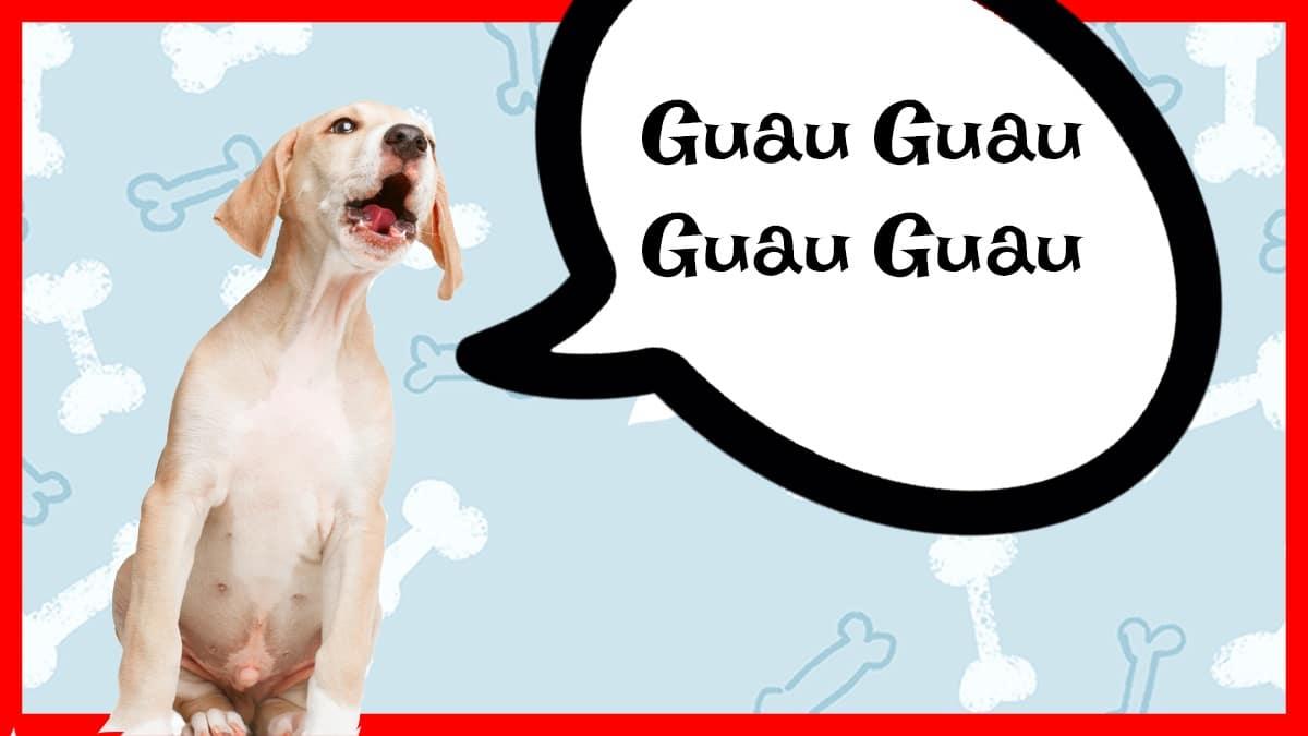 consejos para perros que ladran