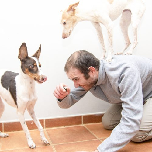 sesion educacion canina online