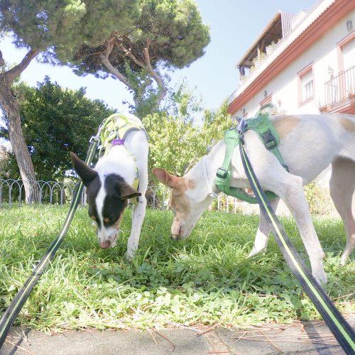 sesiones de educacion canina online