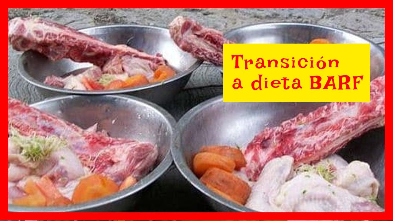 transición a dieta barf